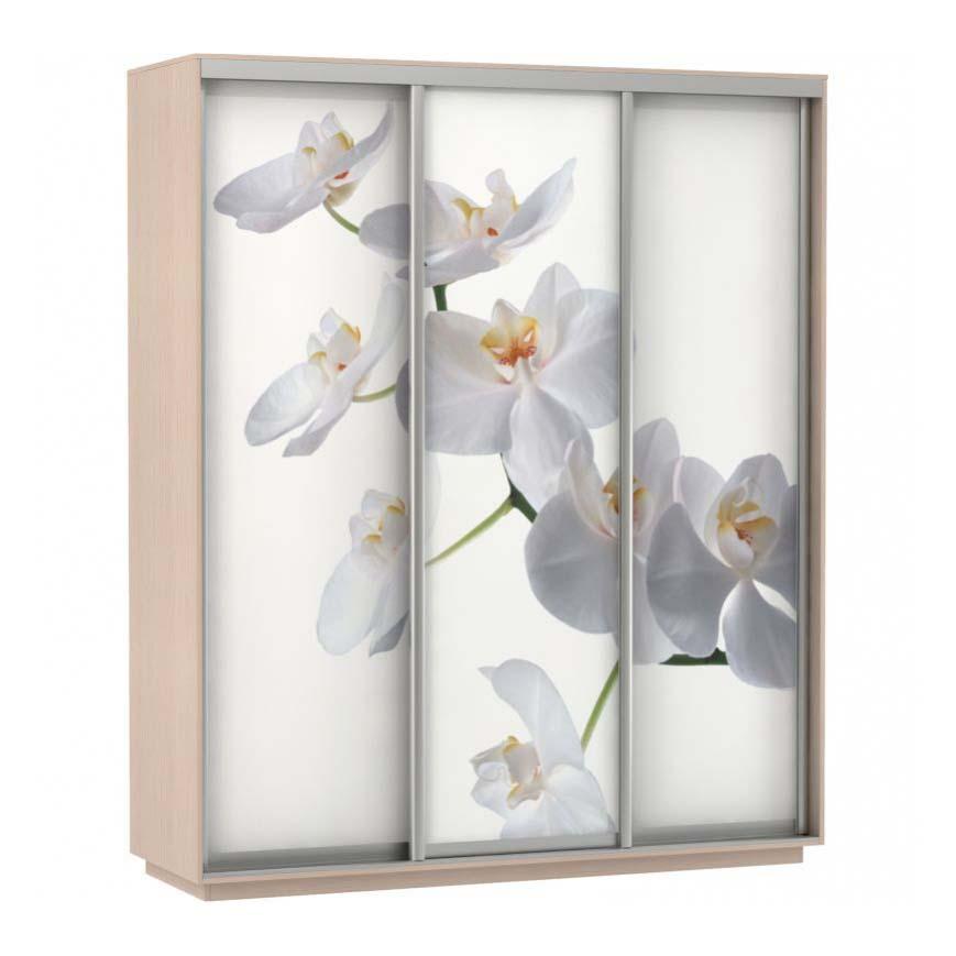 Шкаф купе 3-х дверный Фото Хит орхидея дуб молочный